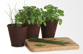 Kit para cultivar tus propios ingredientes culinarios